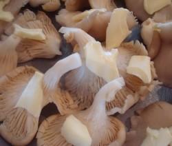 funghi alla crema di formaggi